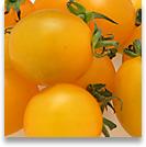 tomato8_shadow.jpg